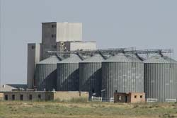 Livestock & Poultry feed
